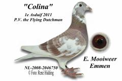 Ciolina van E. Mooiweer